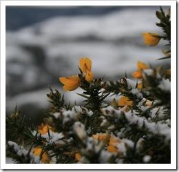 Broome snow