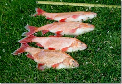 Dead fish 2-2