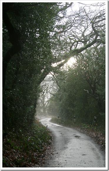 misty lane -1