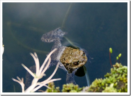 frog search 5-1