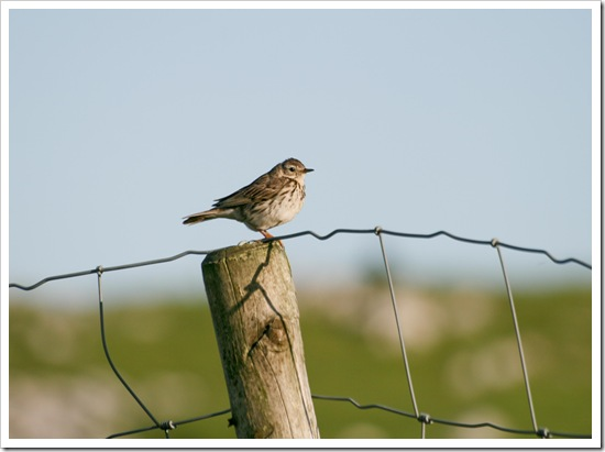 bird on fence -1