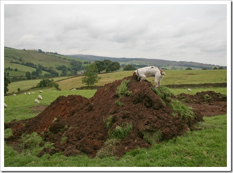 Spud and the giant mole hills -1