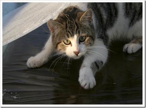 cat on thin ice 2-1