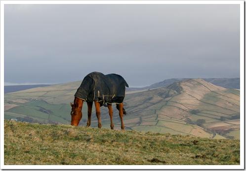 Horse coat -1
