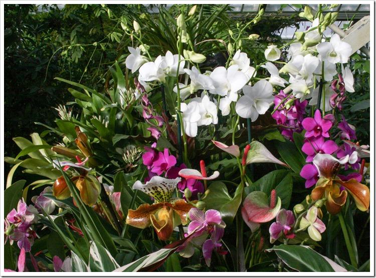Kew 15