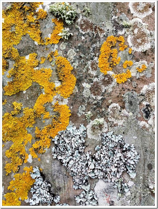 lichen standing stones 2